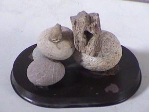 Vida en piedra